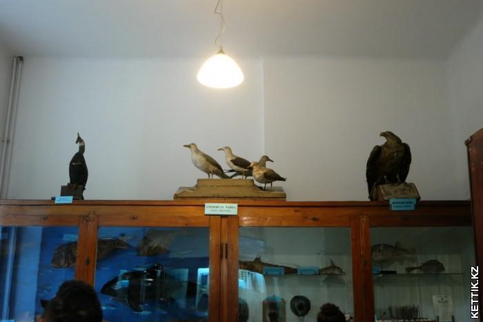 Чучела морских птиц