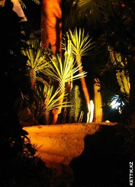 Колонна и пальмы