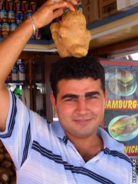Огромная картошка