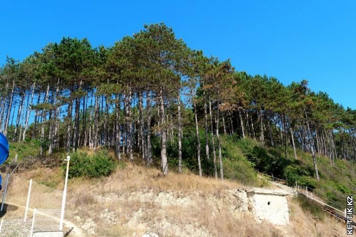 Болгарский лес