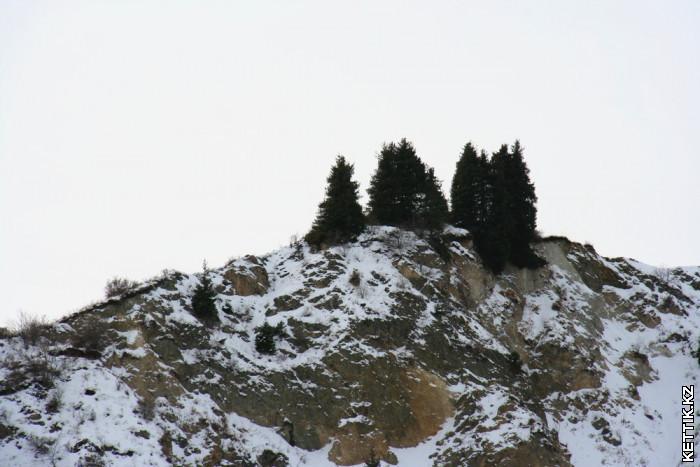 Деревья на скалах