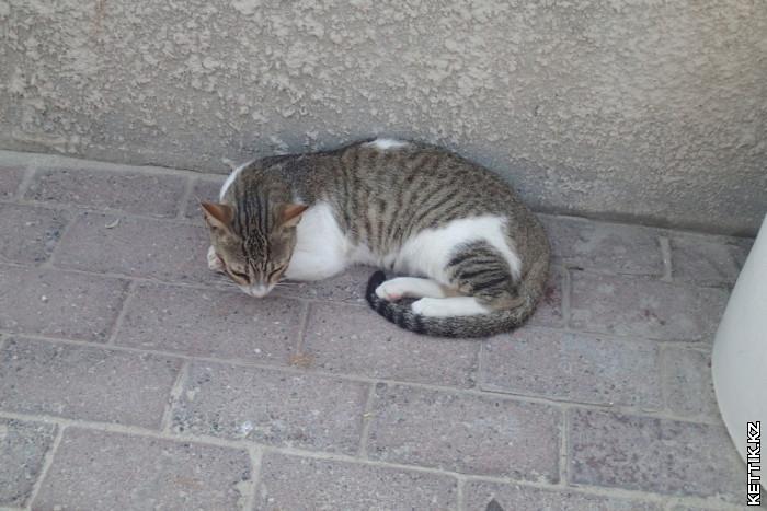 Кот в отеле