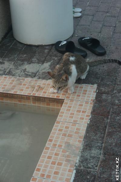 Кот у воды