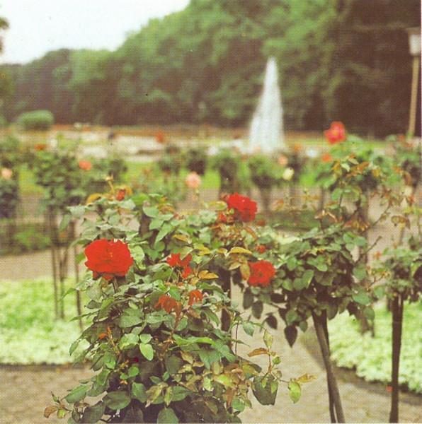 Розы Трептов парк