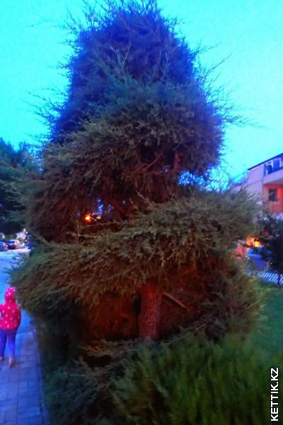 Подстриженное дерево