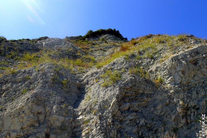 Белые скалы Растения