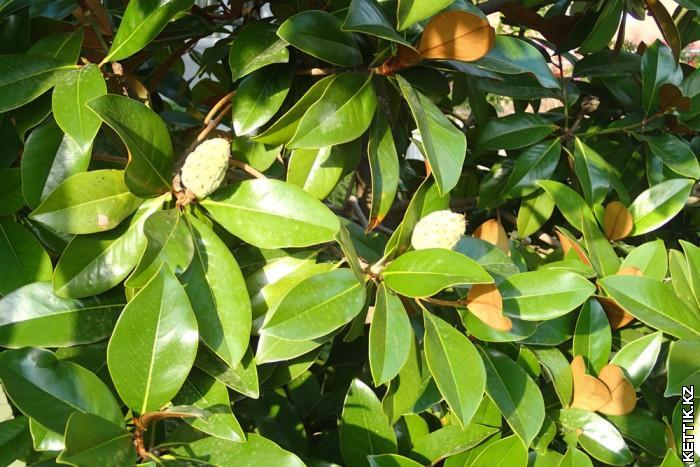 Субтропическая растительность
